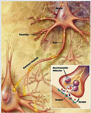 Illustration of synaptic transmission.